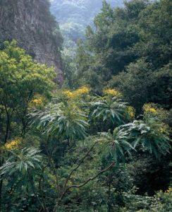 Dichter Wald auf La Palma
