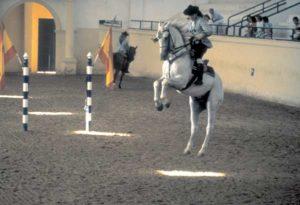 Training in der Königlichen Andalusischen Reitschule von Jerez