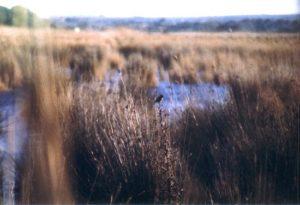 Der Naturpark S'Albufera bietet vielen Vogelarten ein Refugium