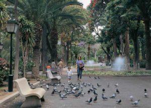 Im Stadtgarten von Santa Cruz führen schattige Alleen an Lorbeerbäumen und anderen Baumriesen vorbei