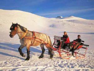 Pferdeschlittenfahrt in der Sierra Nevada
