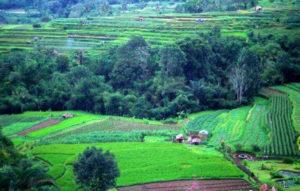 Grüne Reisterassen auf Bali