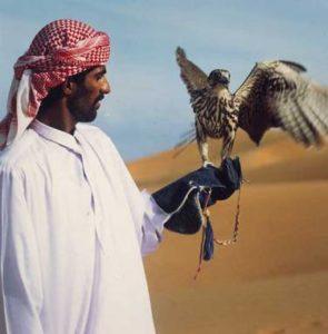 Die Falknerei ist eine beliebte Freizeitbeschäftigung der wohlhabenden Bewohner von Dubai