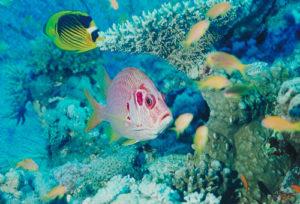 Die Unterwasserwelt in Ägypten ist für Taucher ein Traum