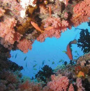 Vor den Malediven gibt es einzigartige Korallenriffe