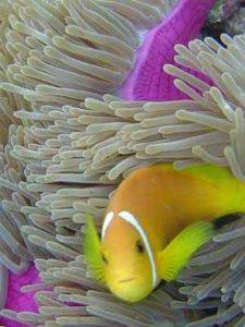 Besonders Taucher und Schnorchler zieht es auf die Malediven-Atolle