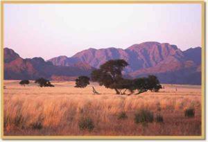 Große Teile Namibias sind Savanne