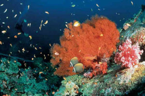 Die Unterwasserwelt vor Thailands Küste ist bei Tauchern sehr beliebt