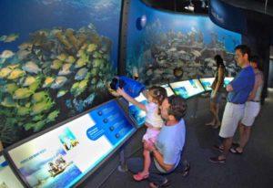 Florida Keys Eco-Discovery-Center - alles Wissenswerte rund um das Ökosystem Meer