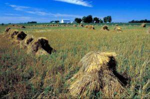Missouri - die Kornkammer der USA
