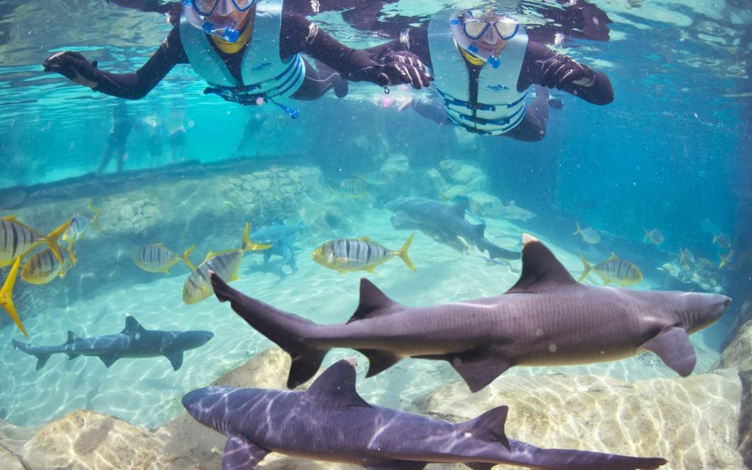 Mit Haien tauchen in Discovery Cove in Orlando