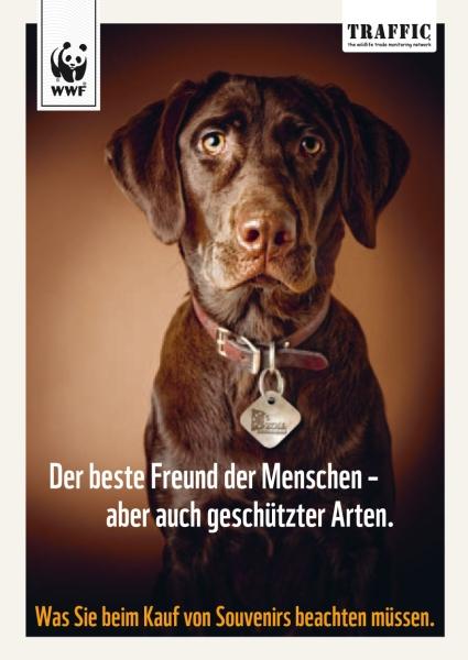 Warnung vor Tier-Souvenirs von Reisen aus dem Ausland