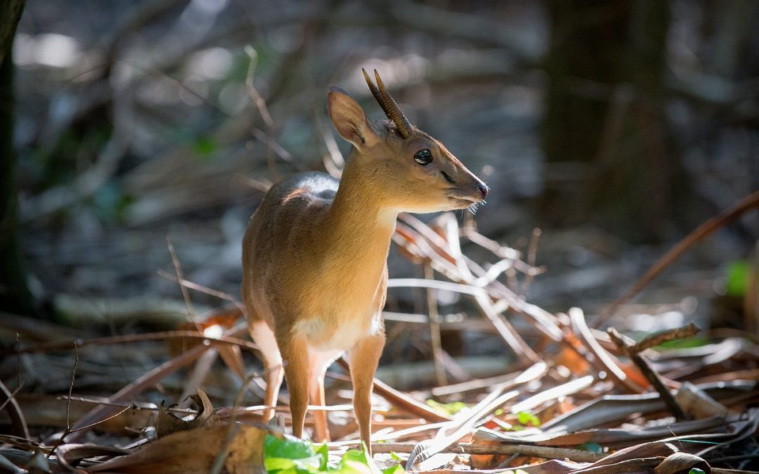 Erfolgreiches Antilopen-Schutzprojekt von andbeyond