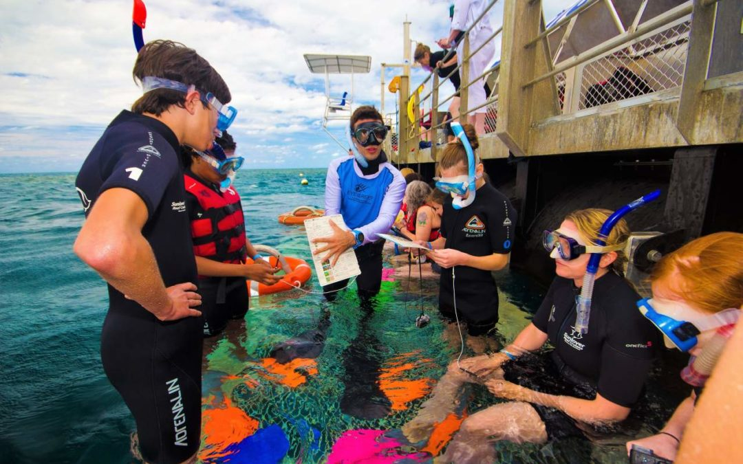 Urlauber als Meeresbiologen am Great Barrier Reef