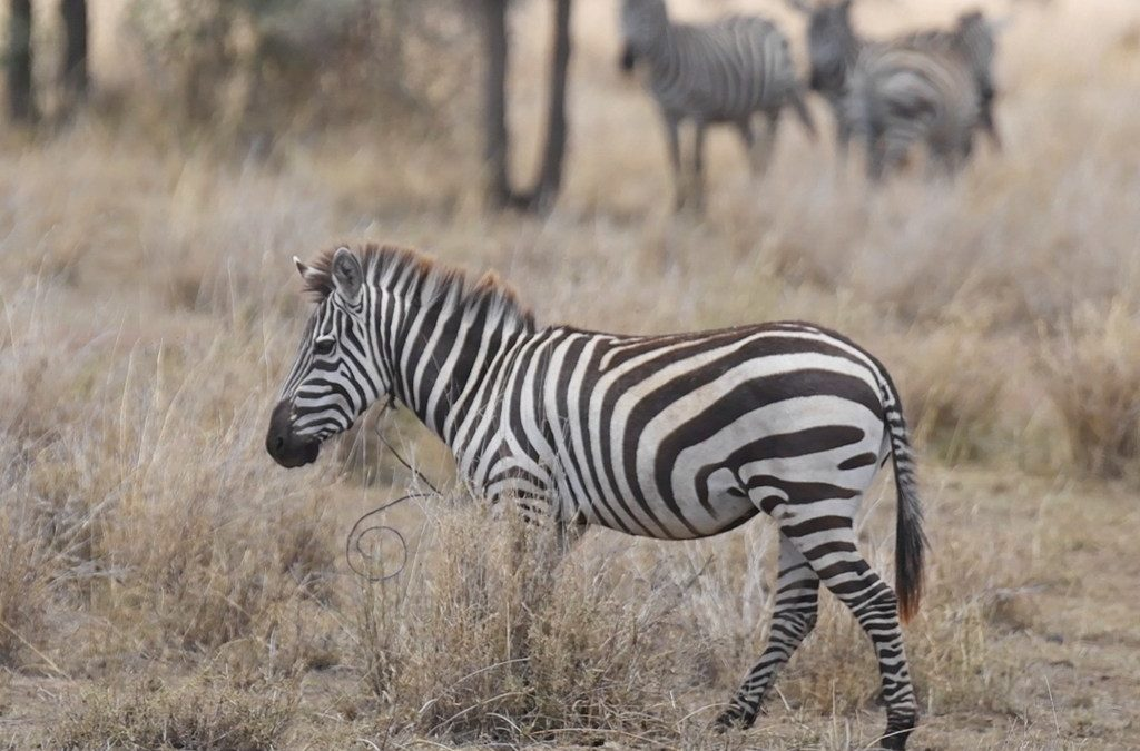One Nature Hotels unterstützen Umweltprojekte in der Serengeti
