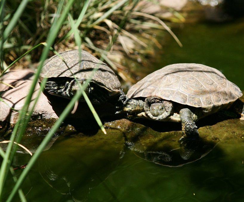 Schildkrötendorf in Carnoules neu eröffnet