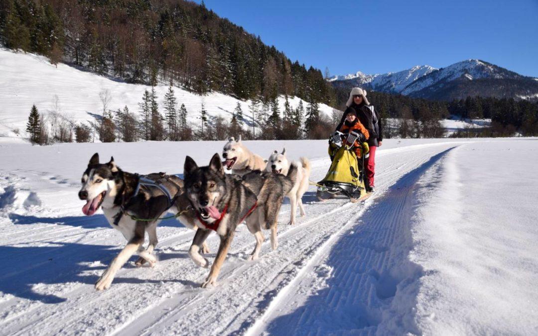 Programmübersicht Schlittenhundecamp 2018 am Pillersee