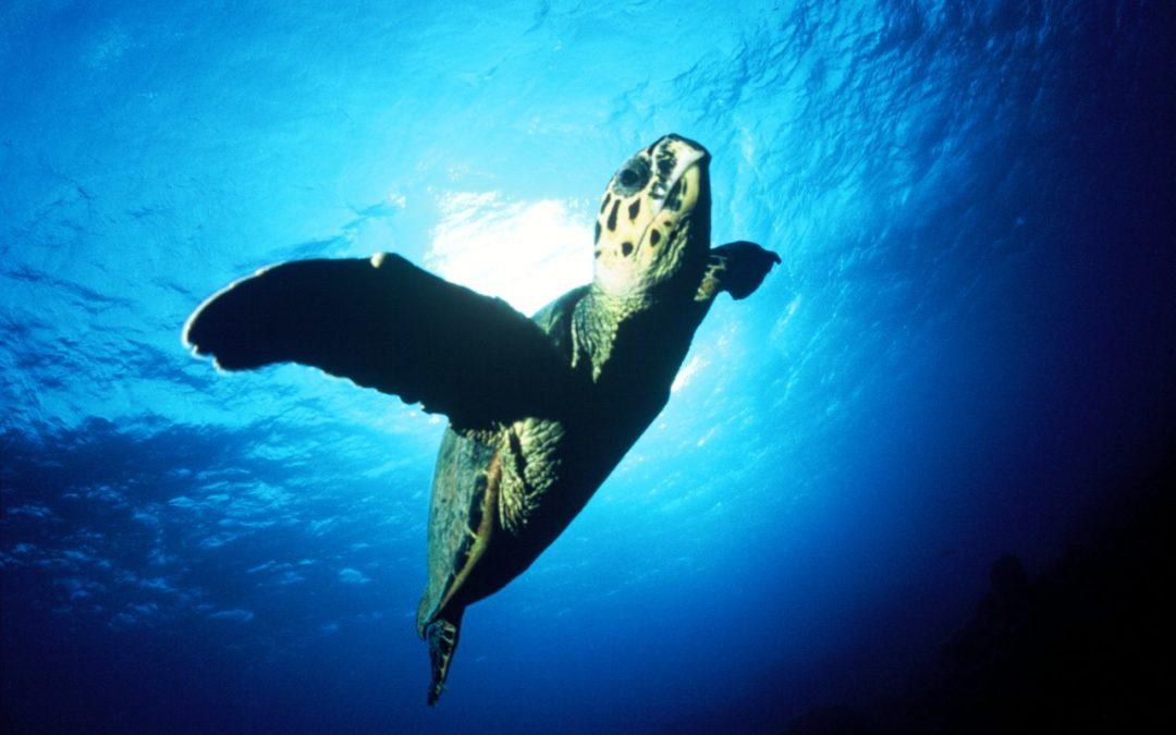 Meeresbiologisches Zentrum auf Malediveninsel Kuredu eröffnet