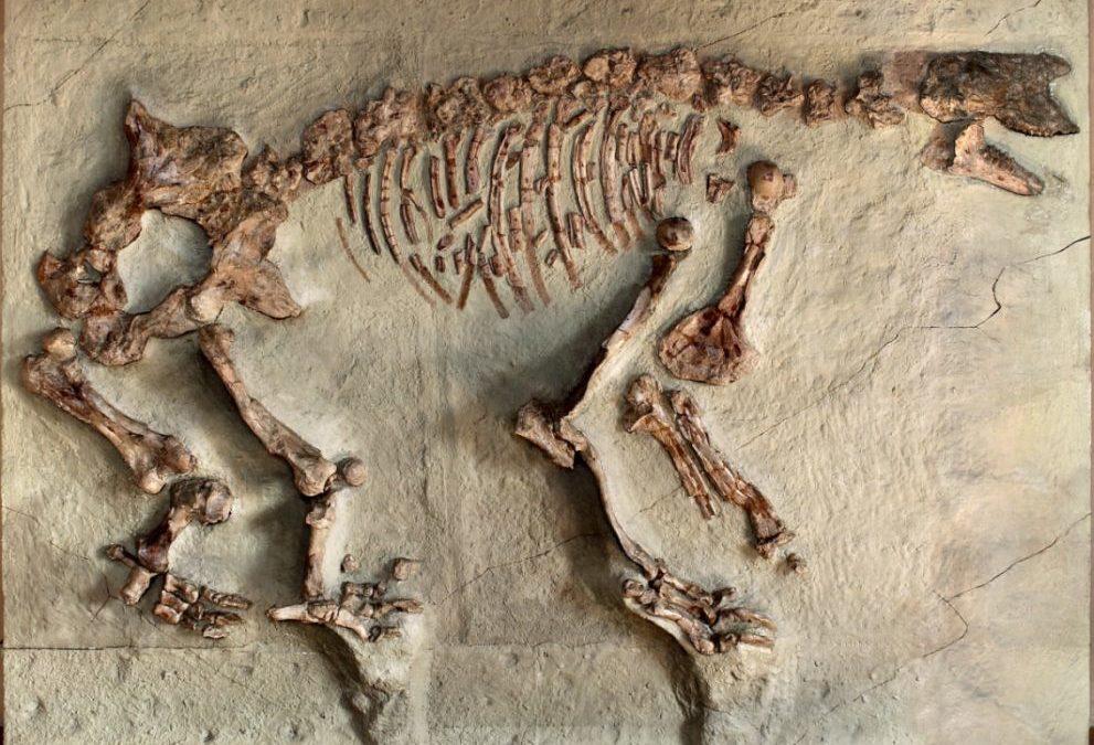 Lehrpfad an der paläontologische Stätte von Sansan