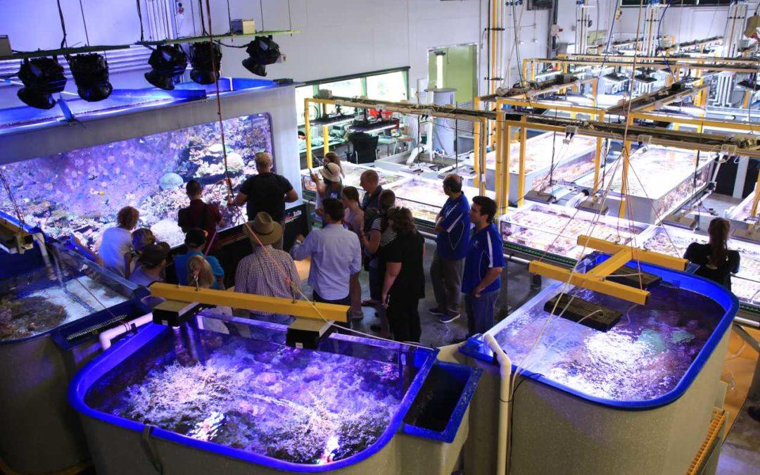 Zu Besuch bei Meeresbiologen in Queensland