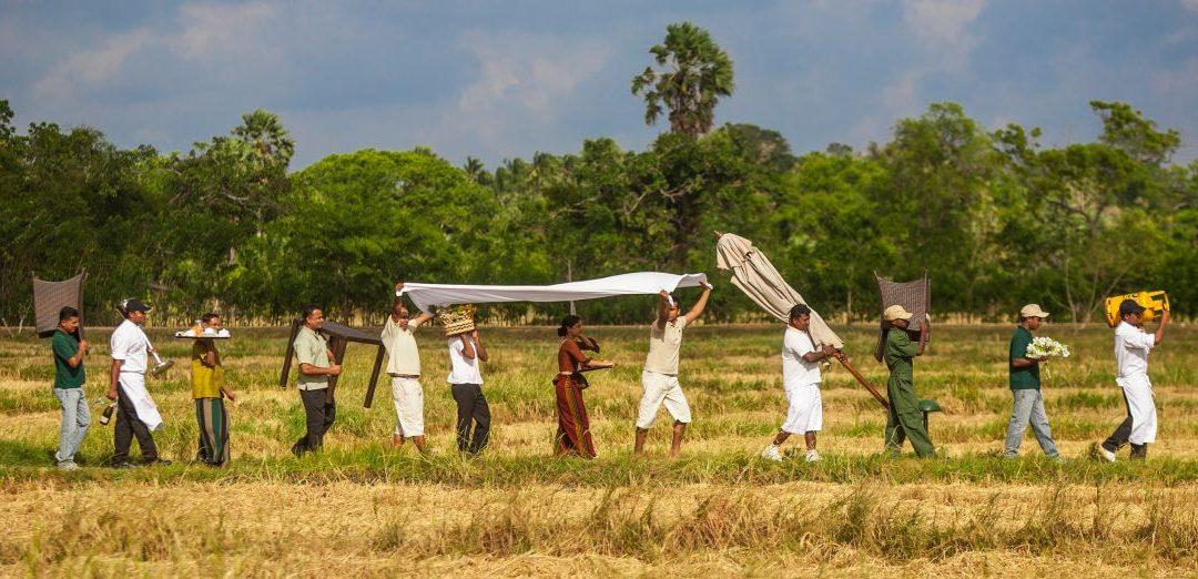 Helfen bei der Reiseernte in Anuradhapura auf Sri Lanka