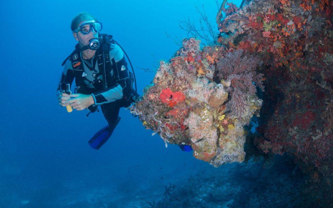 Milaidhoo Resort: Urlauber können Meeresbiologin unterstützen