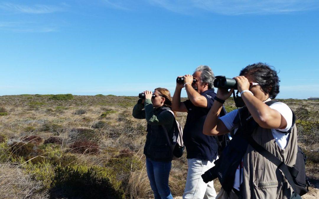 Vogelfans treffen sich an der Algarve zum Sagres Birdwatching Festival