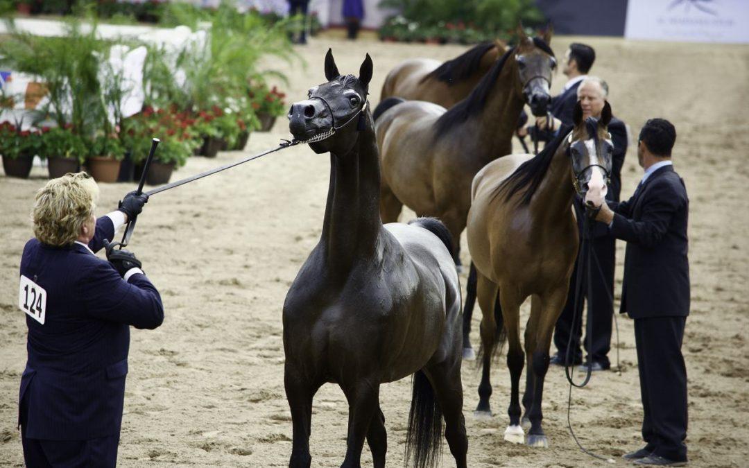 Pferdezüchter aus aller Welt bei den Arabian Breeder Finals