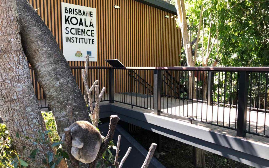 Brisbane: neue Forschungsstation für Koalas auch für Besucher offen