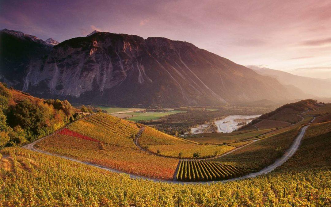 Weinlese in der Schweiz aktiv unterstützen