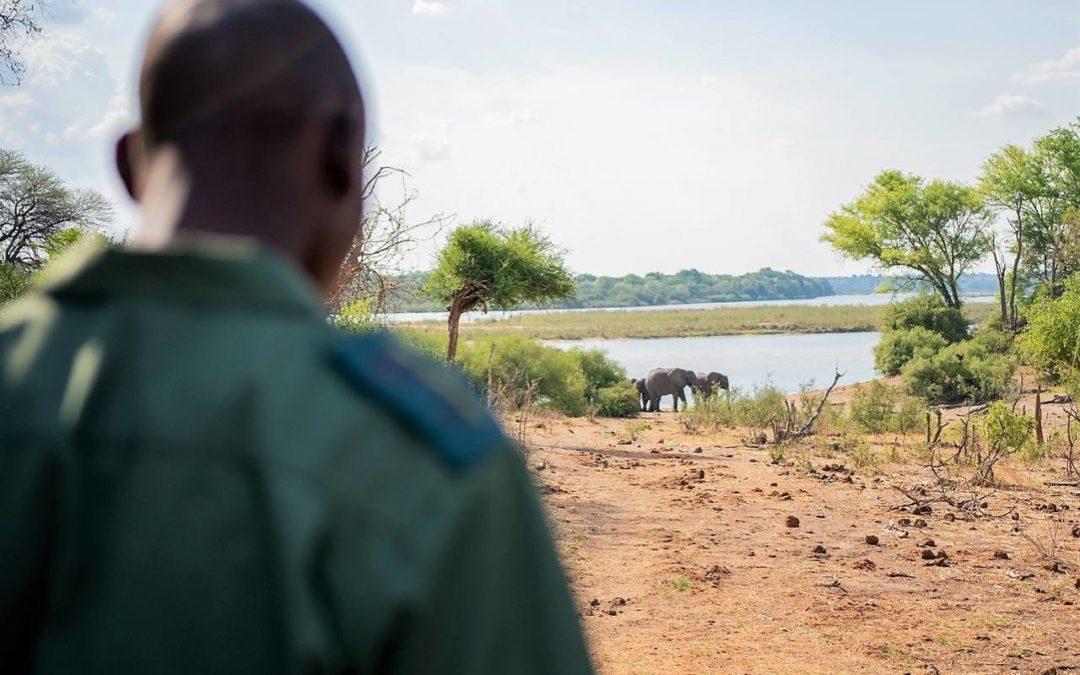 Namibia: Projekt zum erfolgreichen Zusammenleben von Elefant und Mensch