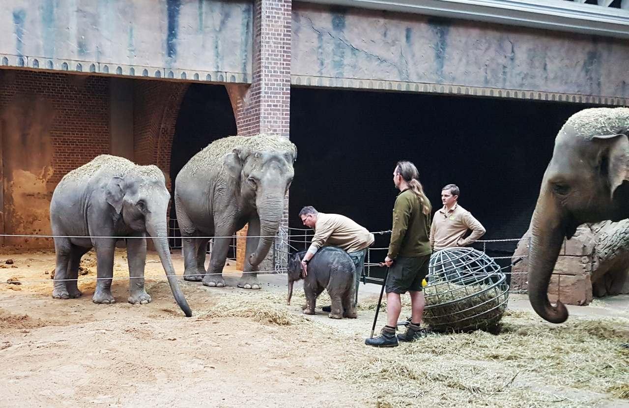 Kontaktanbahnung Elefantenkalb mit seinen Tanten