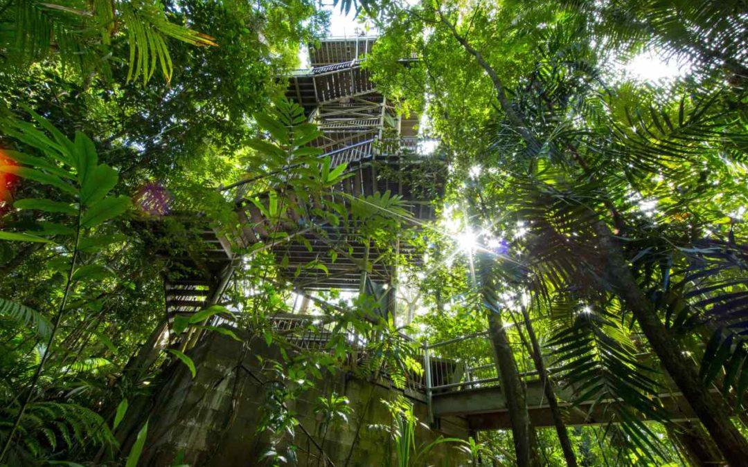 Daintree Attractions Pass – neuer Erlebnispass für Queensland