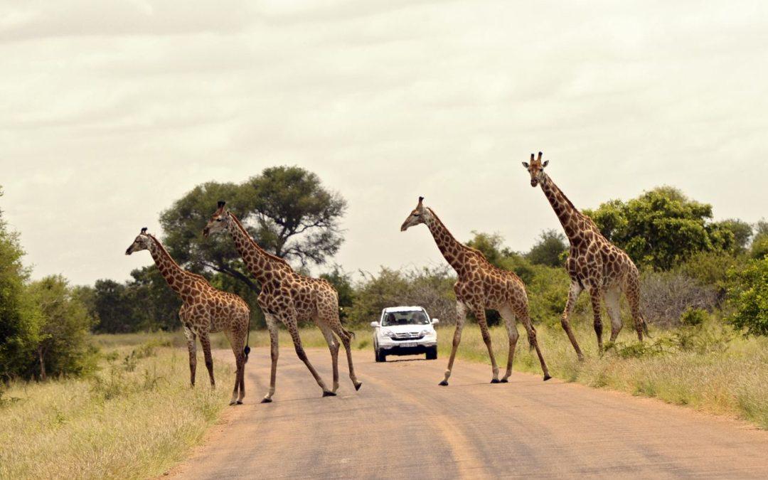 Konzept zur nachhaltigen Entwicklung des Krüger-Nationalparks
