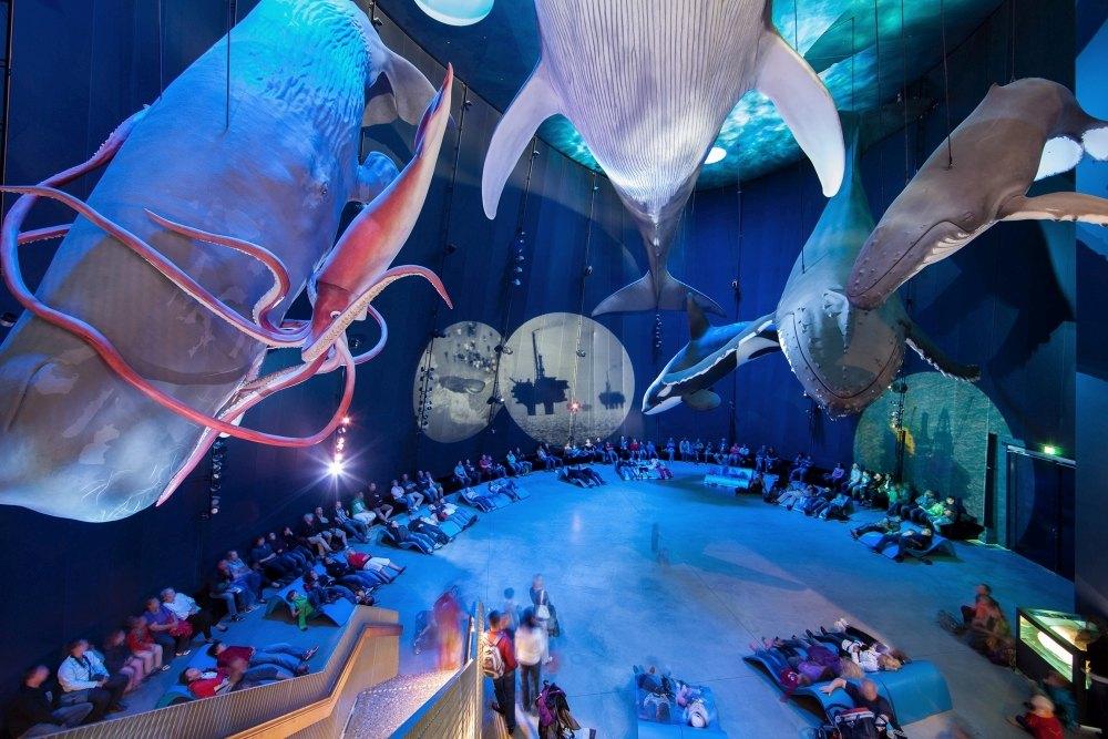 Stralsunder Ozeaneum: Auswirkungen von Lärm auf Unterwasserwelt