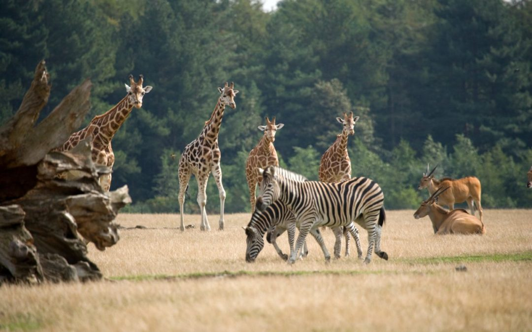 Lolland: Knuthenborg Safaripark jetzt auch mit Luxus Camp