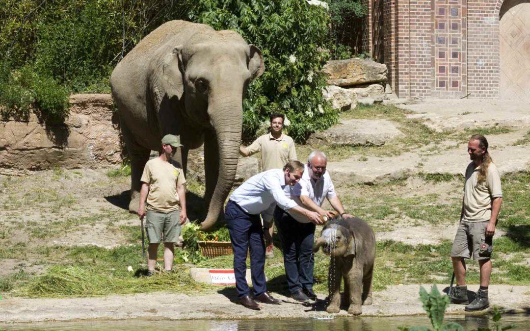 Elefantenjunges im Zoo Leipzig auf den Namen Bền Lòng getauft