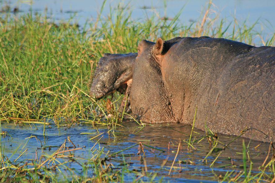 Gebeco: Neue Erlebnisreise ins Okavango-Delta