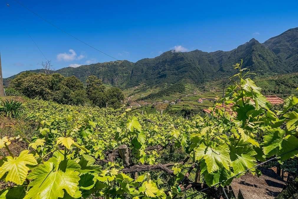 Madeira huldigt dem Wein beim Madeira Wine Festival
