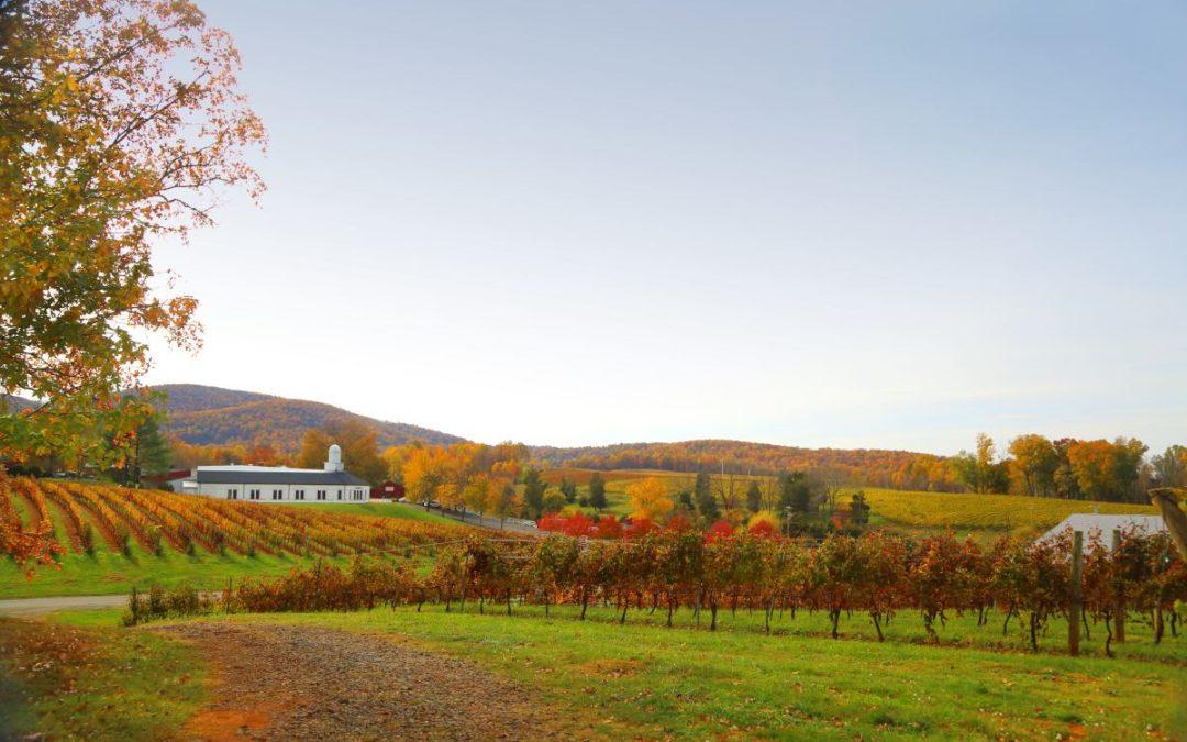 Vielfältige Weinkultur in Virginia und Maryland