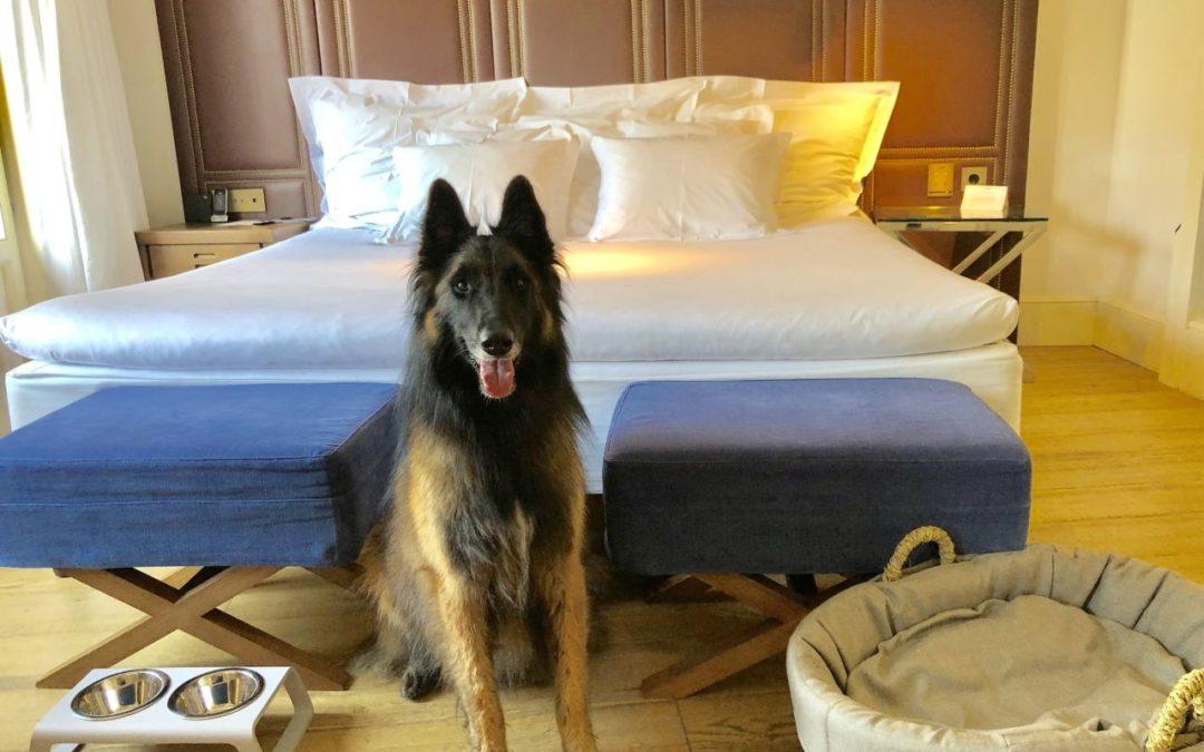 Hunde erlaubt im Designhotel Cort in Palma