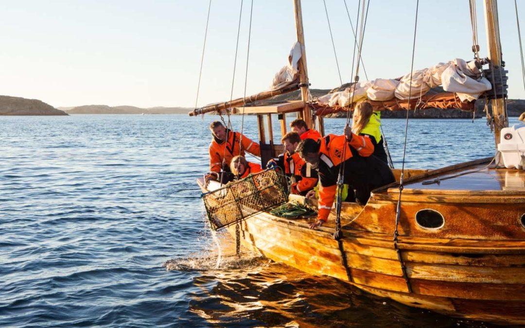 Start der Hummersaison 2019 in Westschweden