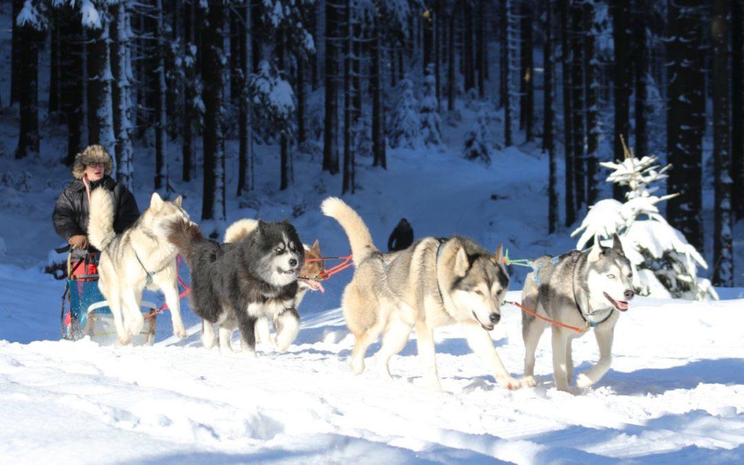 Hundeschlittentouren im Thüringer Wald