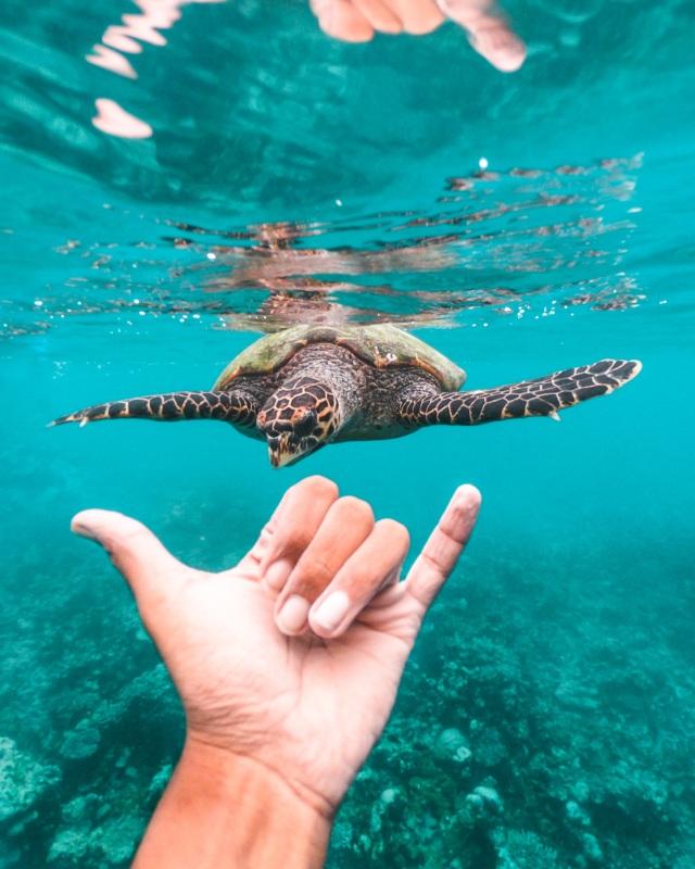 Meeresschildkröte am Riff des Waldorf Astoria Maldives