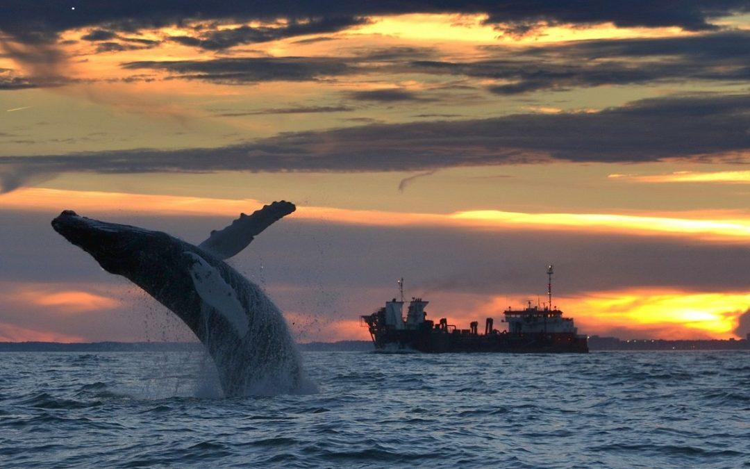 Winter Wildlife Festival in Virginia Beach feiert 10-jähriges Jubiläum