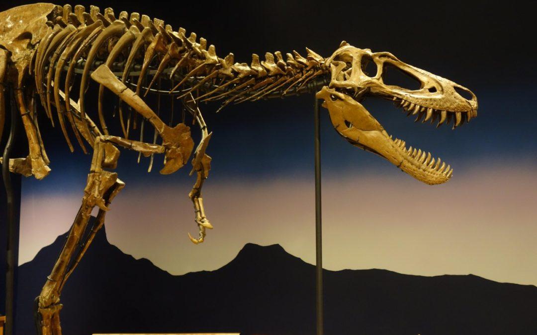 Hochwertige Dinosaurier-Sammlung im Burpee Museum in Rockford