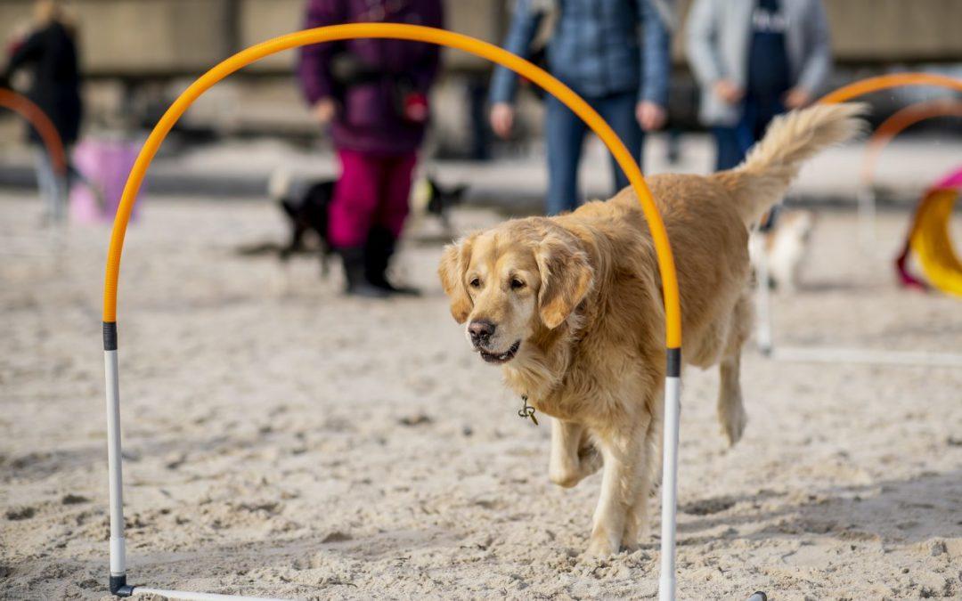 Hunde-Strand-Spiele an den Stränden der Lübecker Bucht